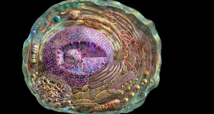 cellule crisp cas9 genes adn arn