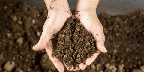 terre sol bactéries super résistance médicaments antibiotiques gène calcium