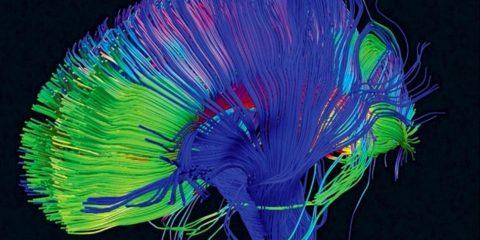cerveau lsd psychédélique drogue harmoniser cerveau connexion neurones