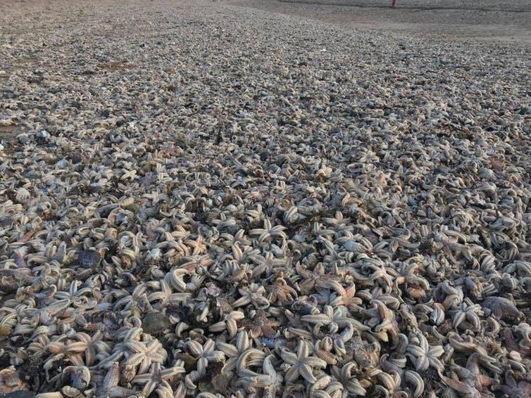 echouage masse massif mort étoiles de mer mollusques crabes uk angleterre