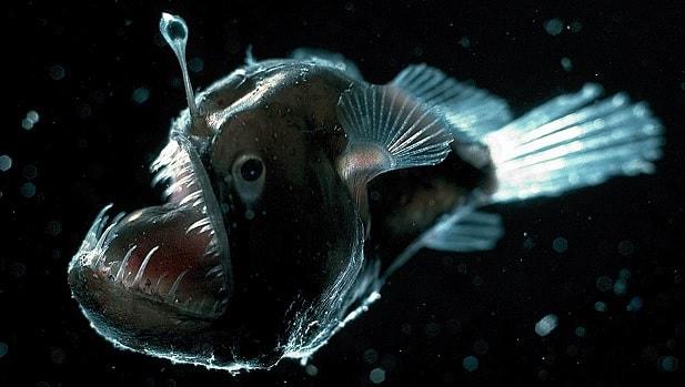 poisson pecheur