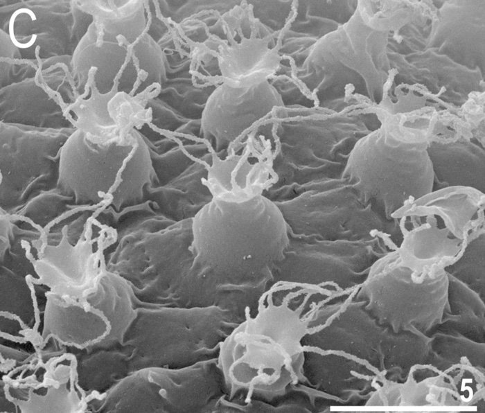 tardigrade organisme extreme
