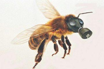 abeille masque