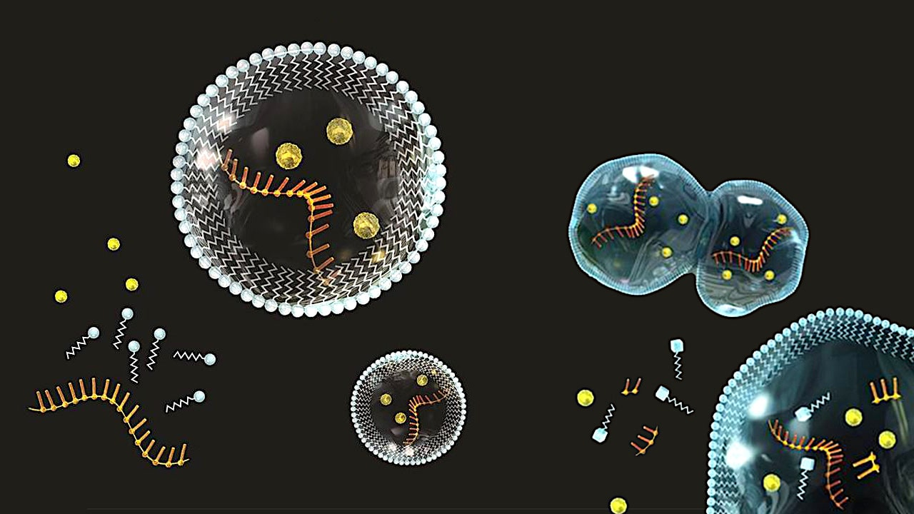 cellules origine vie