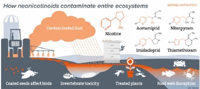 neonicotinoides toxicite