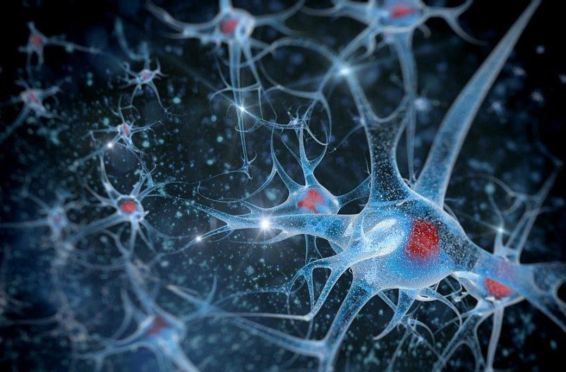 neurones artiste