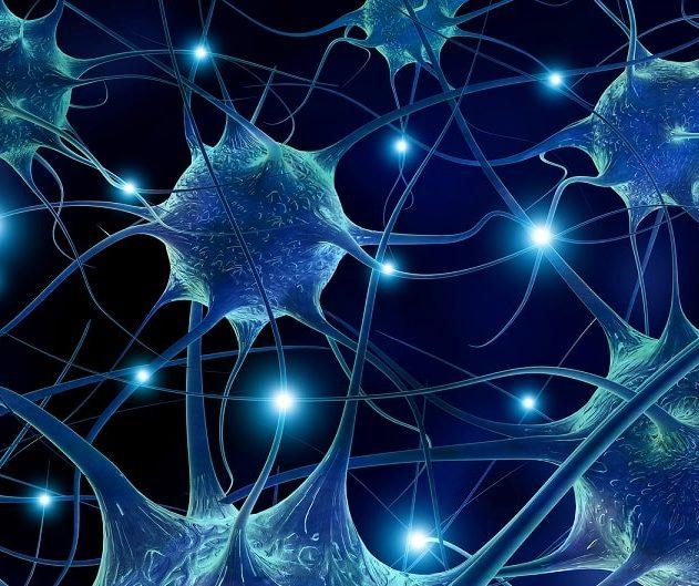 neurones autisme