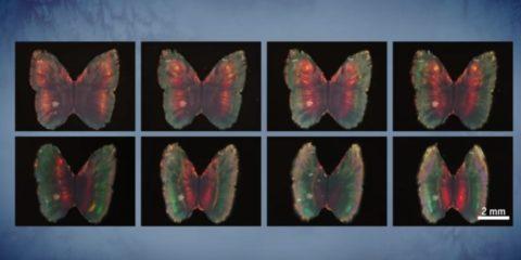 papillon couleurs