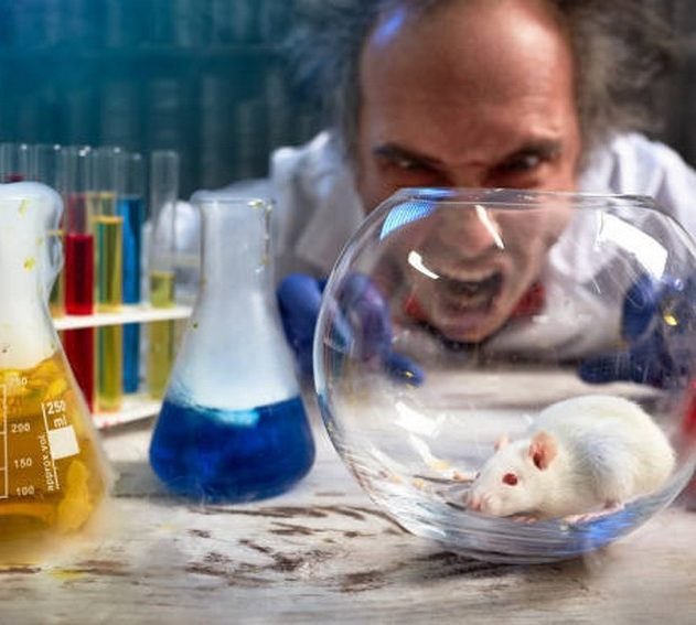 scientifique photo istock fou souris rat laboratoire cliche