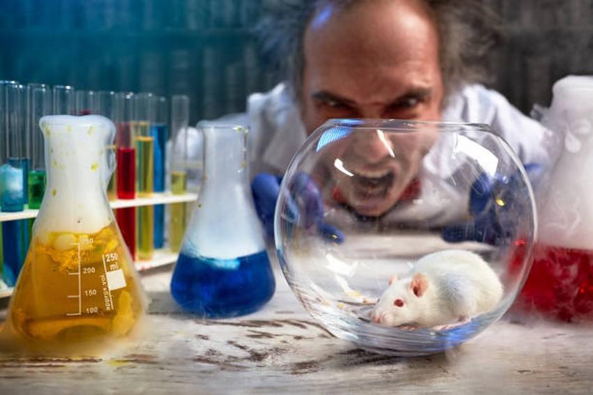 scientifique photo istock fou souris rat laboratoire cliche