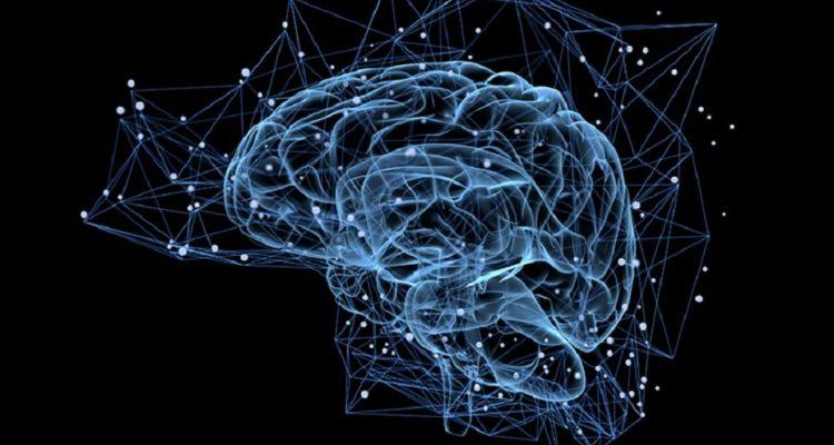 cerveau hologramme