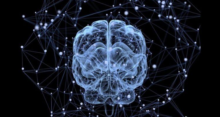 cerveau reseau