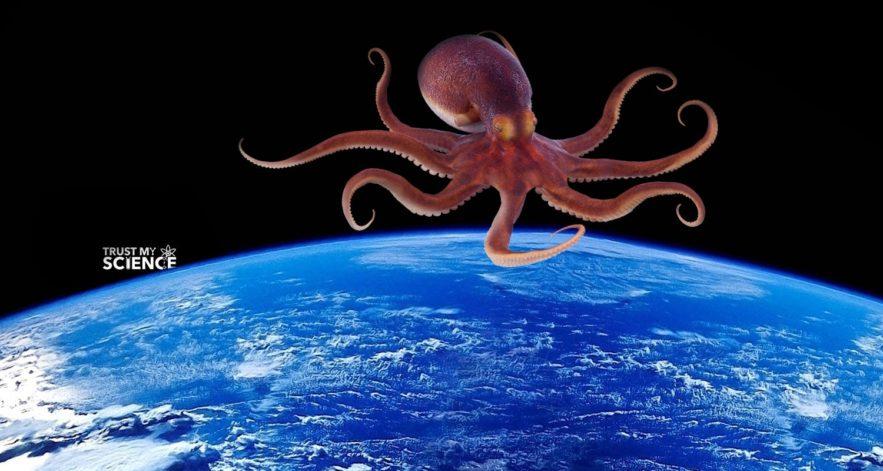 poulpe origine cosmique explosion cambrienne