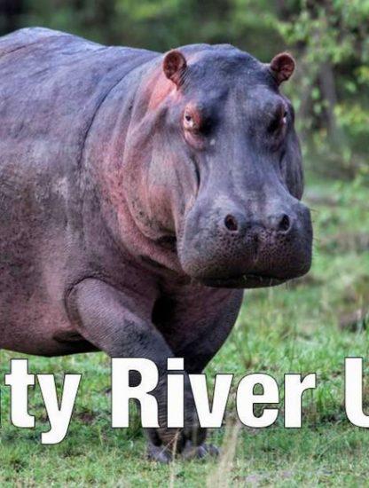 hippopotame animal suggestion nouveau nom hilarant zoo aquarium