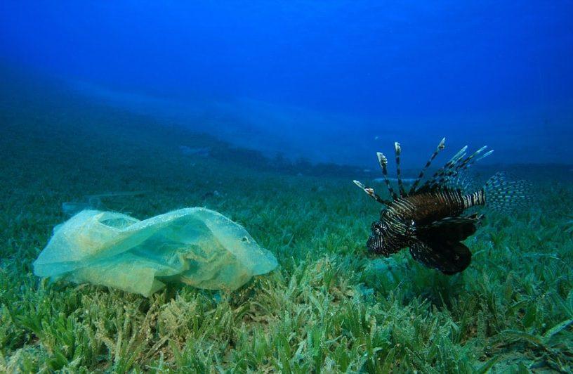 plastique poisson