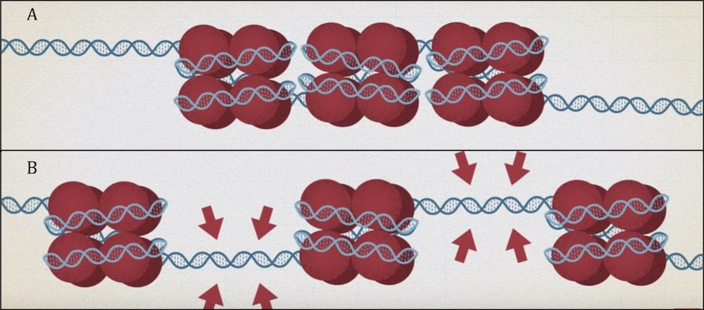 representation blocage genes
