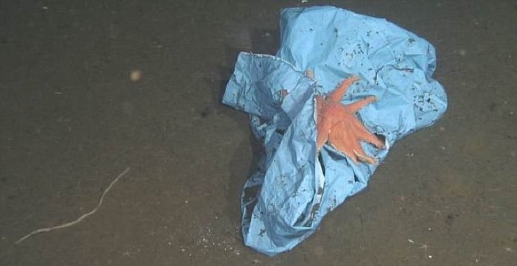 sac plastique etoile