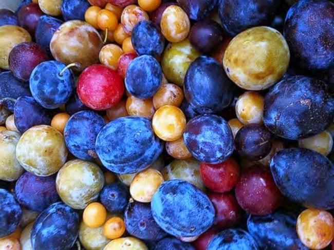 40 fruits