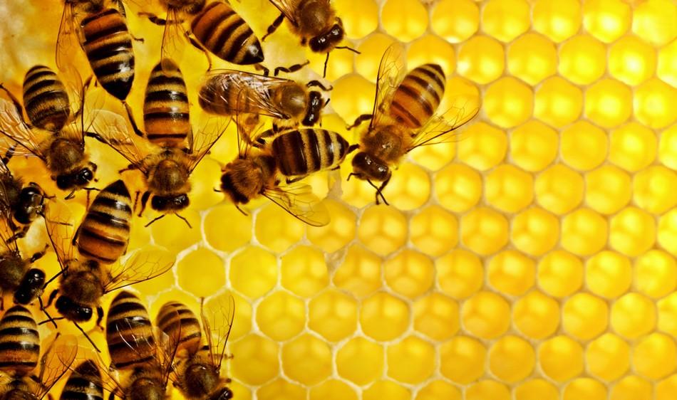 abeille cerveau intelligence numerique zero nombre chiffres