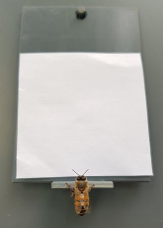 abeille concept zero chiffre nombre rien numerique intelligence animal insecte