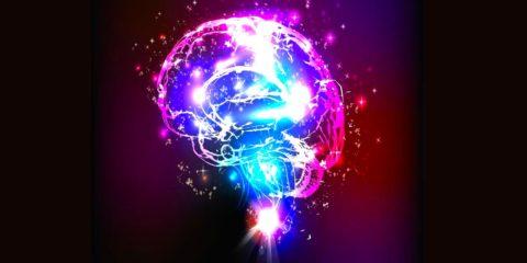 cerveau taille