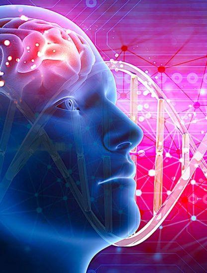 intelligence genes
