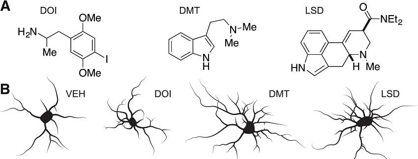 neurone drogue