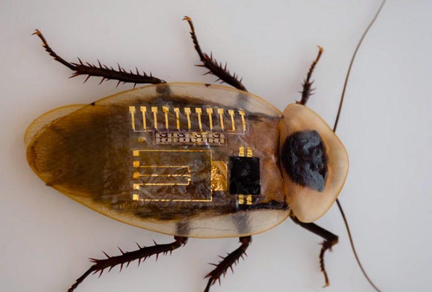 neurone nerf artificiel robot insecte sensations