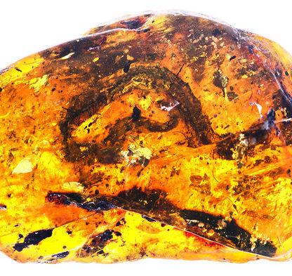 serpent fossile ambre serpenteau cretace