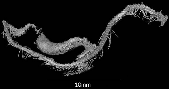 bebe serpent ambre fossile cretace