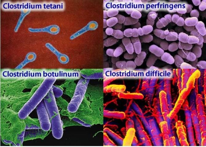 clostridium botulinum tetani toxines
