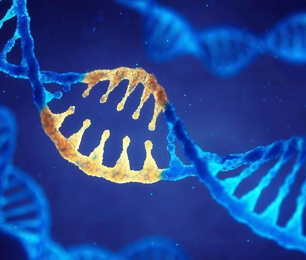 cirpsr mutations génétique adn