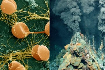 extremophiles bacteries conditions extremes