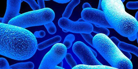 flore intestinale autisme