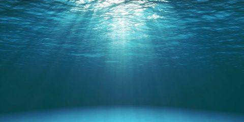 ocean rechauffement climatique animaux paleozoic