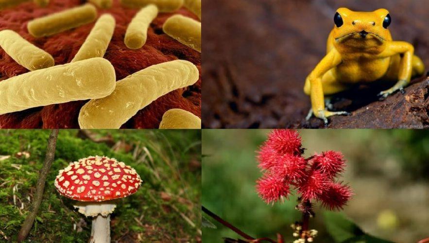 poisons toxines substances toxiques