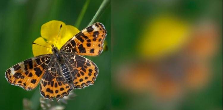 vision papillon oiseau motifs