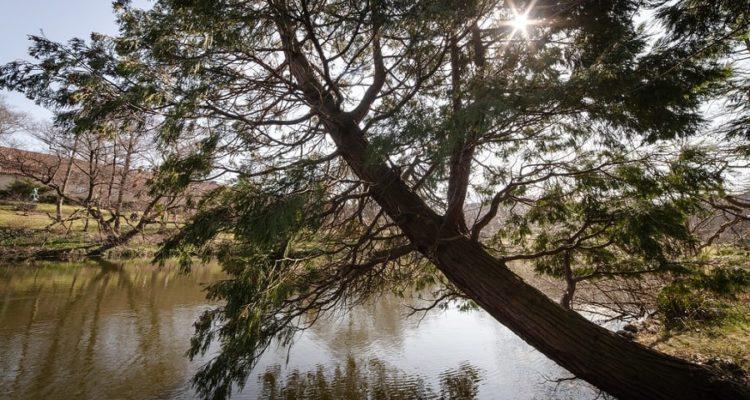 arbre ecorce gravite