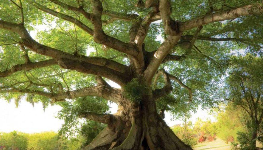 arbre rechauffement climatique climat bois densite faiblaisse