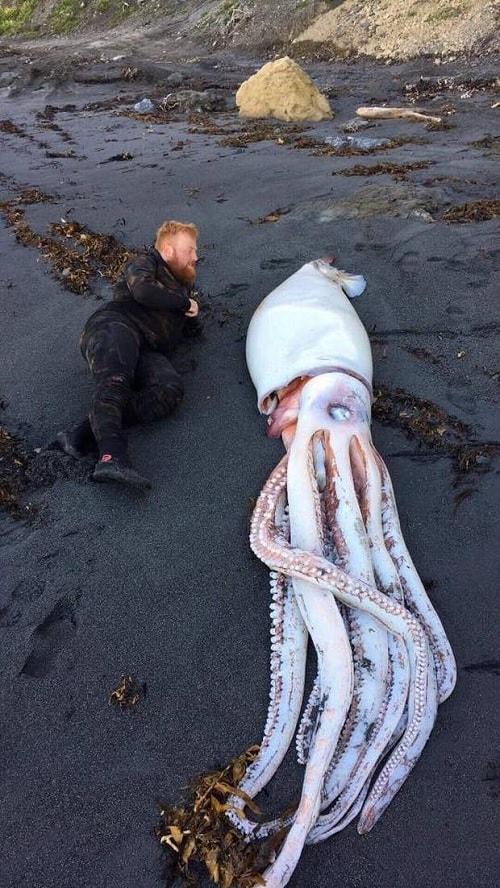 calamar geant plongeur tete