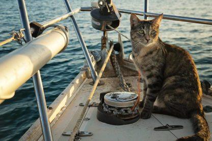 chat bateau naviguer navigateur viking navire