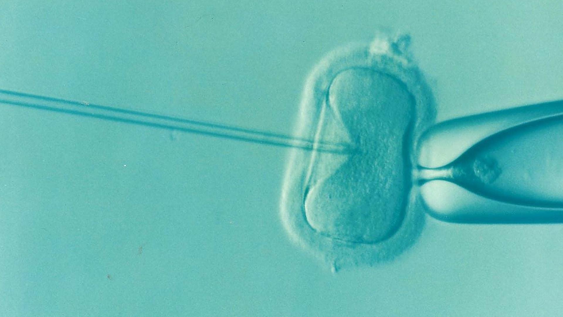 fecondation-in-vitro-fiv-2 - Trust My Science