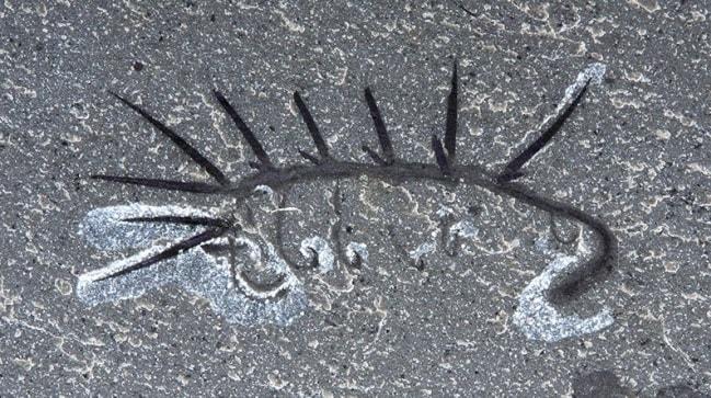 fossile burgess walcott