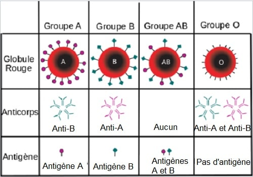 groupes sanguins antigenes anticorps