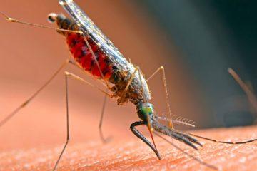moustique piqure peau
