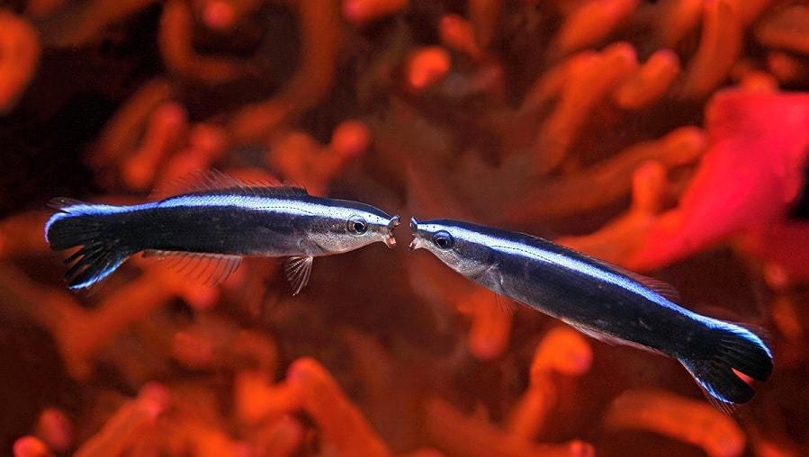 l'herpès datant beaucoup de poissons gratuit en ligne Skype rencontres