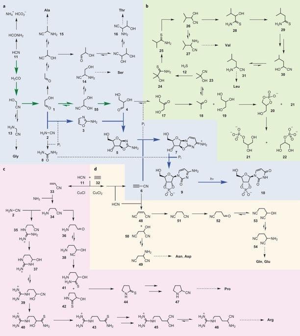 reactions biochimiques lipides nucleotides