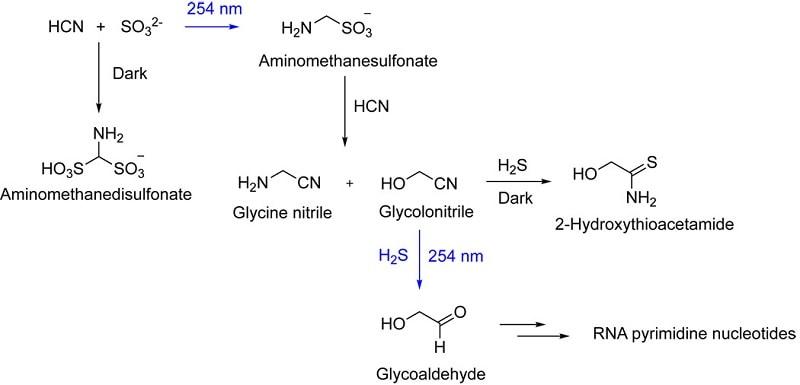reactions biochimiques UV pyrimidines