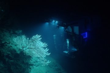 corail recifs coralliens