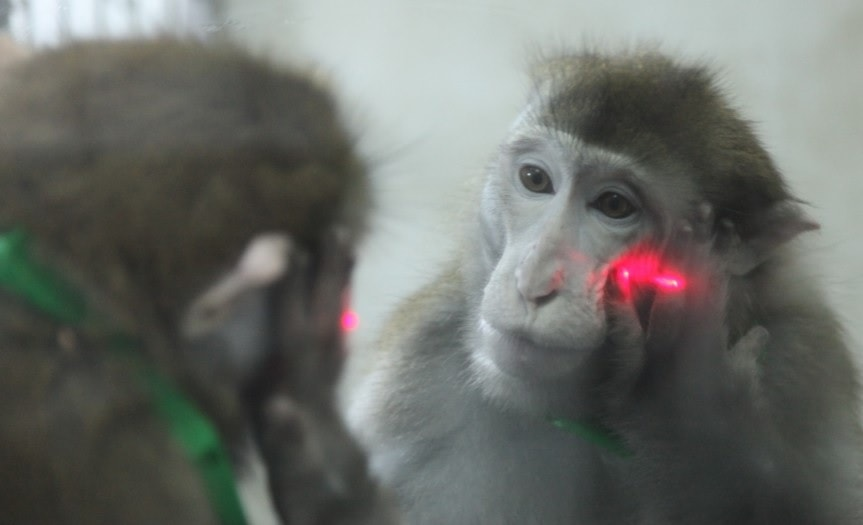 test miroir animal chimpanze